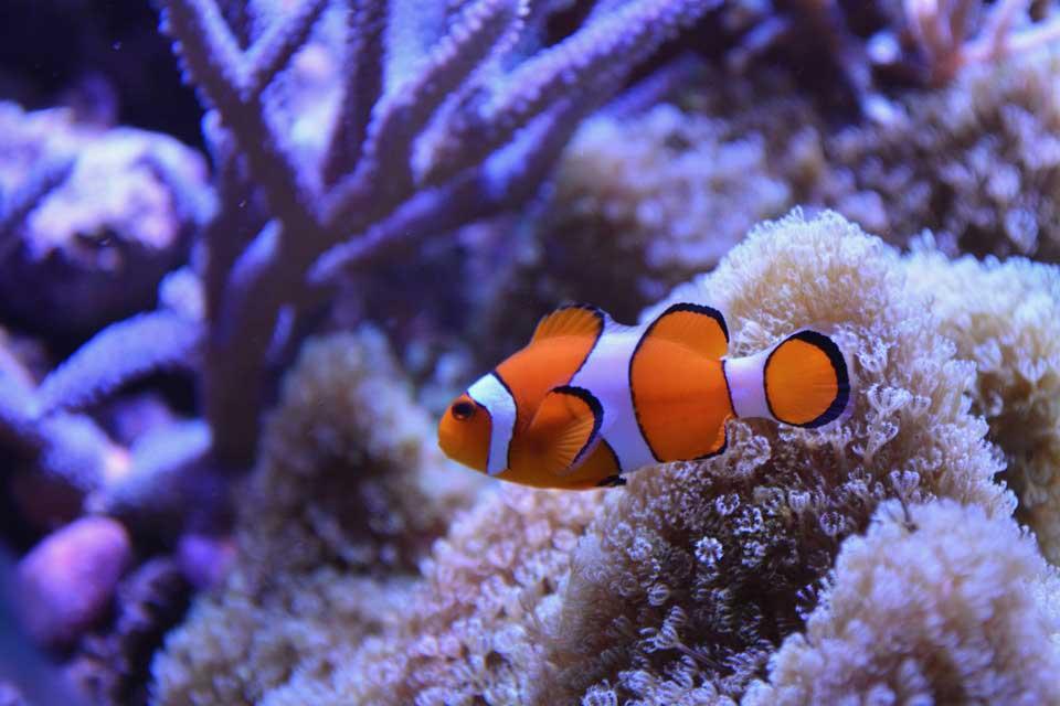 Fische sind Natur unter Wasser